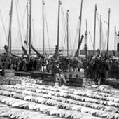 Photograph of fish market at Newhaven harbour, Edinburgh, late nineteenth century (Crown Copyright, National Records of Scotland,GD265/16/16/1)