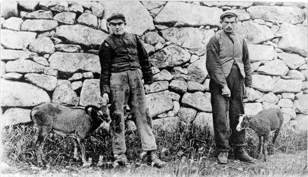 Islanders and Soay sheep, c1913 (National Records of Scotland, GD1/713/1)